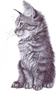 great drawing of a kitten.  Beautiful