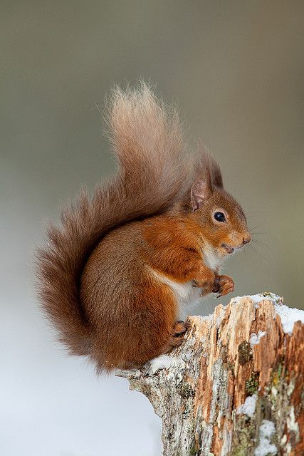 We're also asking to hear about some of the other wildlife that's at home in your garden or park during the year. Are you lucky enough to see red squirrels? #birdwatch