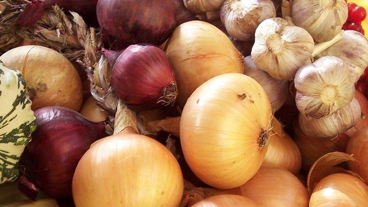 Proč jsou bylinky vhodnější než antibiotika – II.
