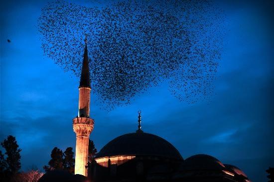Birds over the Sinan Pasha Mosque, Istanbul, Turkey