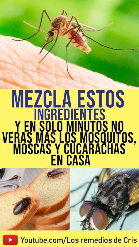 Video Mostrando Repelentes Naturales Para Eliminar Los Bichos Rastreros Del Repelente De Insectos Casero Repelente De Mosquitos Casero Remedios Para Cucarachas