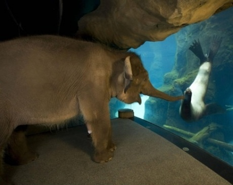 Hello sea lion, I am elephant.