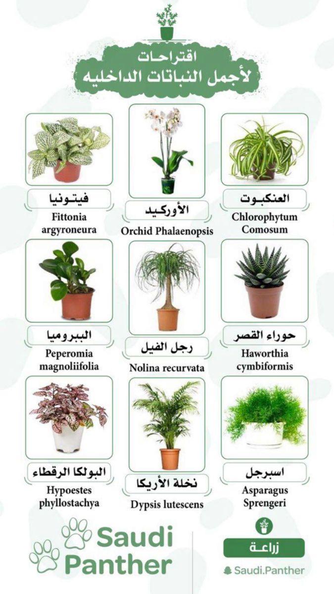 نباتات داخلية جميلة Flowering House Plants Vegetable Garden Diy House Plants Indoor