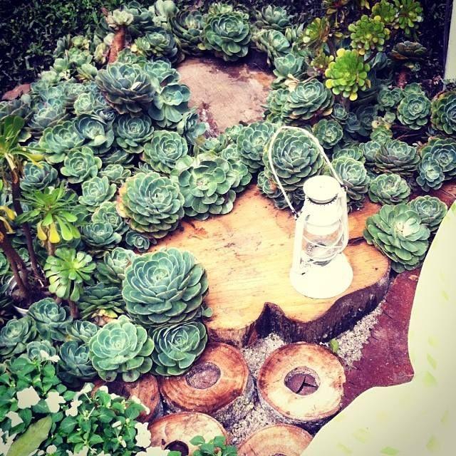 Jardin de suculentas by bonagracia vivero suculentas for Bodas jardin botanico medellin