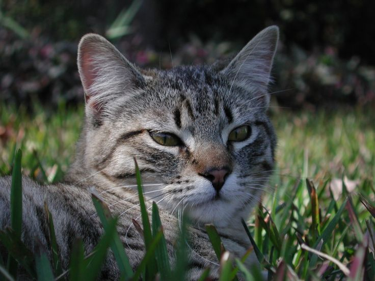 250 Best Cat And Dog Food Related Images On Pinterest