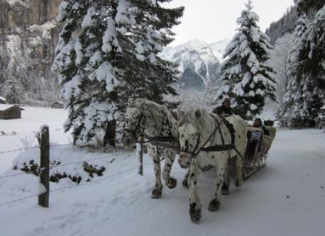 horse sleigh  ride from Grüner Baum to Posaun. lovely walk through the valley