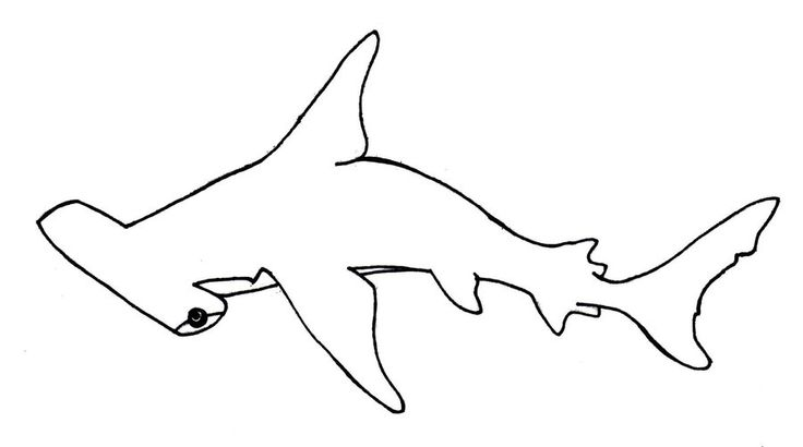 cute hammerhead shark coloring page photo9