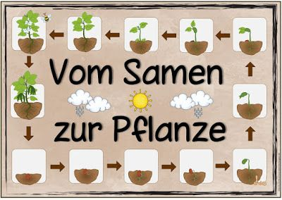 """Ideenreise: Themenplakat """"Vom Samen zur Pflanze"""""""