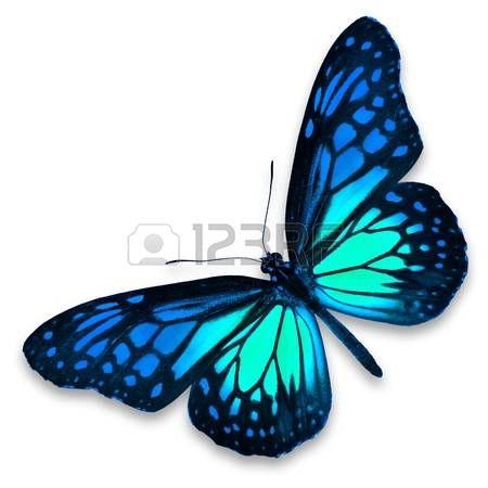 mariposas moradas: Mariposa azul sobre fondo blanco Foto de archivo