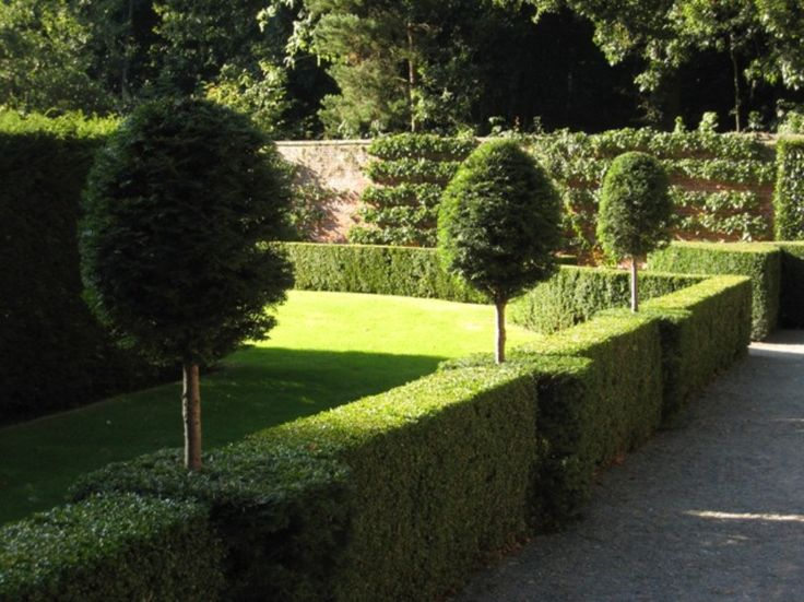 Formal Garden With Small Trees And Privet Hedges