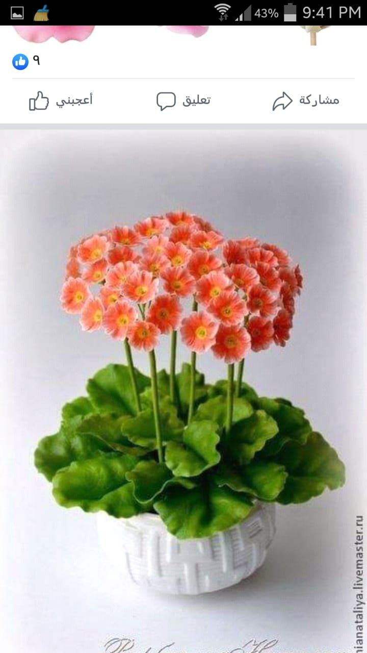 عجينة السيراميك Herbs Plants Crafts