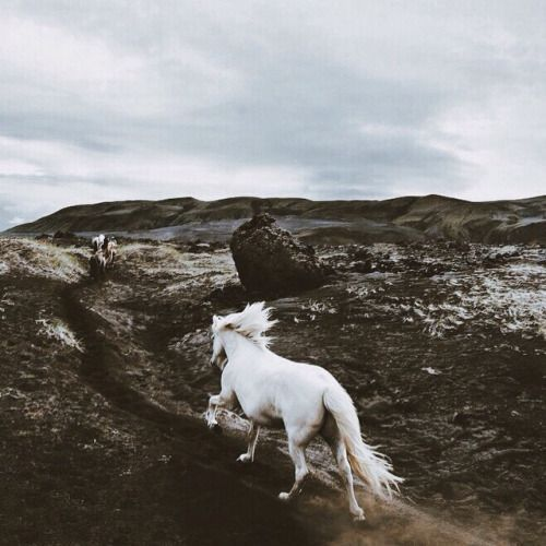 """""""Magical"""" says a pinner... Can you hear her hooves galloping? """"Iceland: 🍀 A happy horse is a free horse."""" 🐎 https://www.youtube.com/watch?v=OapMBWNgTzU beautiful wild horses manes flowing https://www.youtube.com/watch?v=apXGSzStESI https://www.youtube.com/watch?v=_XIANQM3xm0 https://www.youtube.com/watch?v=Md7MYS06Tdw 97.5 https://www.youtube.com/watch?v=7wRHBLwpASw https://www.youtube.com/watch?v=5_5oE0ijhKg"""