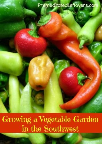 Tips for Growing a Vegetable Garden in the Southwest Region of the United States. Things to consider when starting and growing a garden in the southwest.