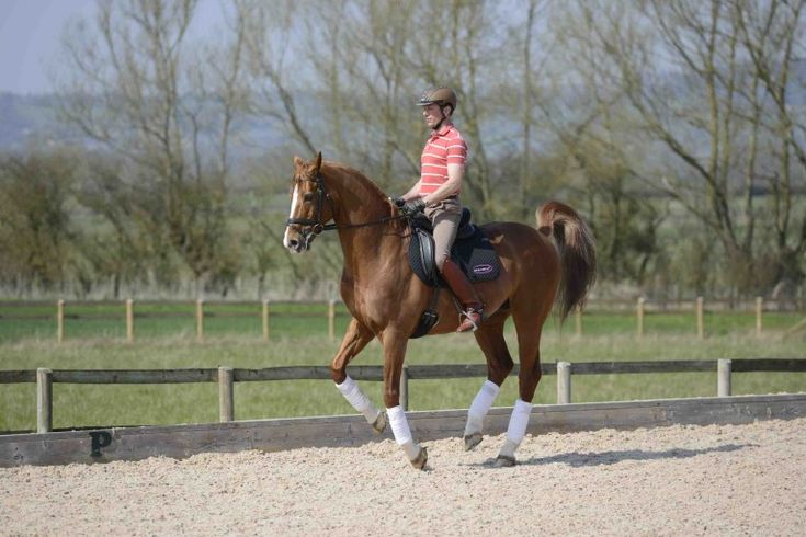 British Olympic dressage stars Carl Hester and Richard Davison have some brilliant advice for training a horse for dressage, including how to ride leg yield and flying changes.
