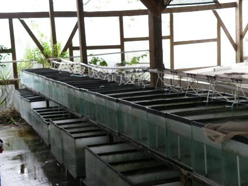 17 best images about florida pond fish farms on pinterest for Fish farms in florida