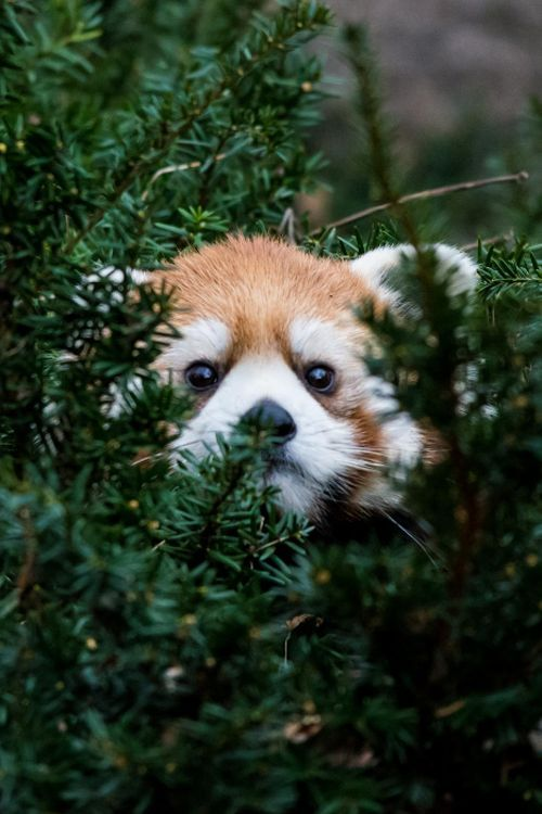 Spying on your ex be like.. P2