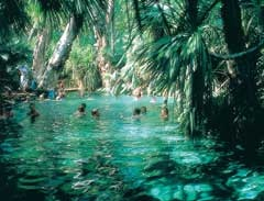 Mataranka Springs in the Northern Territory - unforgettable.