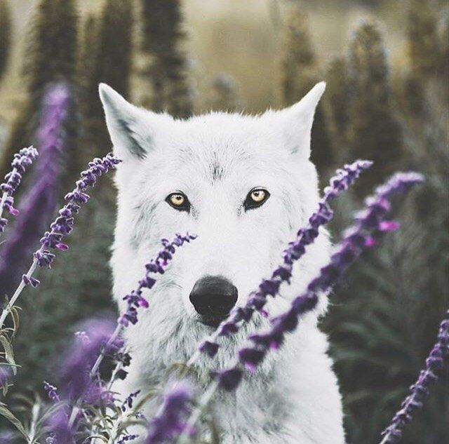 "2,757 curtidas, 13 comentários - By Wolves (@by_wolves) no Instagram: ""First this amazing picture made by @connorsurdi with @projectwildsong ! I LOVE THOSE COLORS! . I…"""