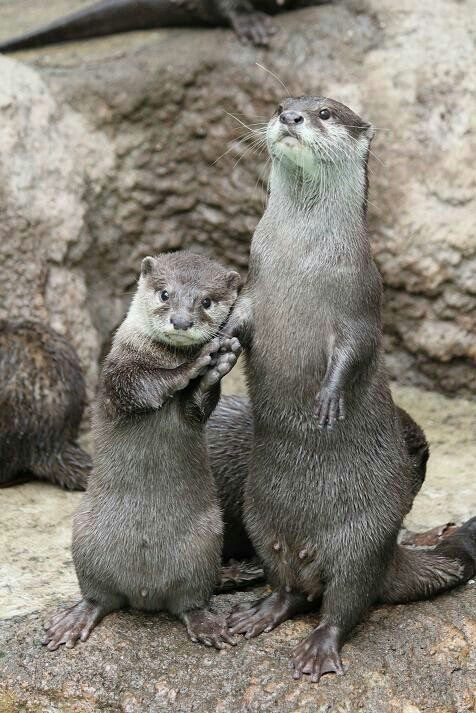 Archibald Otter (@Otter_News)   Twitter