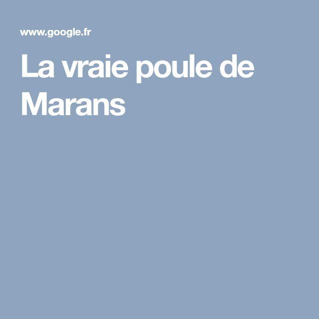 La vraie poule de Marans
