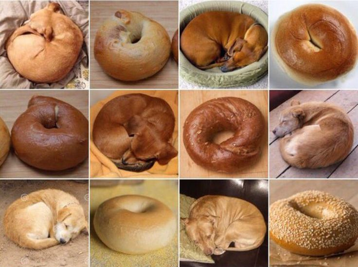Puppy or Bagel? This Twitter Account Will Make You Question Everything. Do you know your chihuahuas from your muffins?
