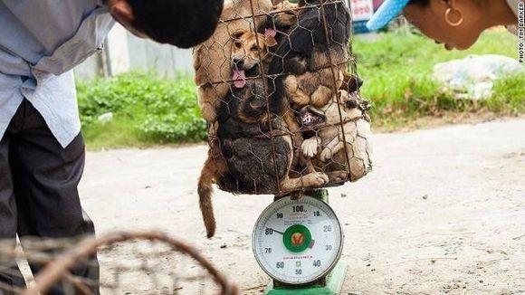 Bonjour à toutes et à tous,   Tous ensemble, mobilisons-nous pourconvaincre les pays membres de l'ONU, de faire passer un texte de loi internationale, visant à interdire la vente de la fourrure, ainsi que la peau de chat et de chien.   Sincèrement,   Mohammed Himi