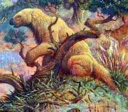 shasta ground sloth nothrotheriops shastensis nothrotheriops texanus extinct nothrotheriops shastensis