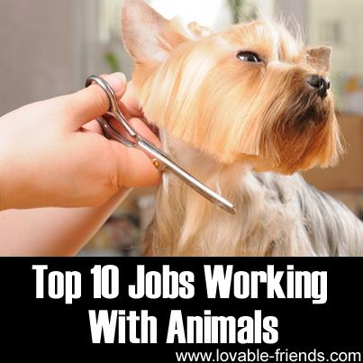 Top 10 Jobs Working With Animals - For future reference for Lily.