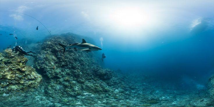 PHOTOS: Breathtaking Underwater Views Of Threatened Coral Reefs