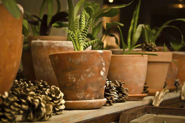 Or place pinecones in potted plants, because they're uncomfortable for your cat to step on and will keep them out.