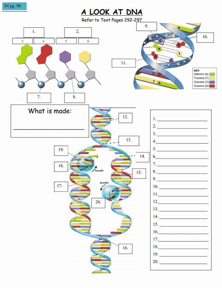 Genetics Worksheet Middle School Genetics Worksheet Middle ...