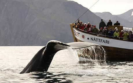 Iceland, whale-watching