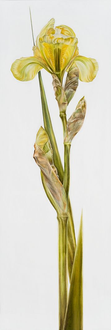 Yellow Iris. www.natalietoplass.com