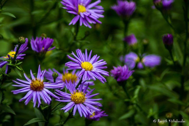 https://flic.kr/p/E6cKvC | Flower from National Botanical Garden of Georgia | Flower from National Botanical Garden of Georgia
