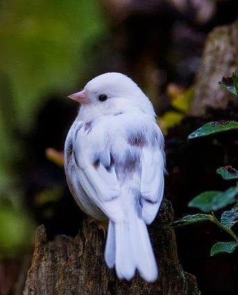 rare icy blue bird from Europe - still looking for a proper name, but so beautiful