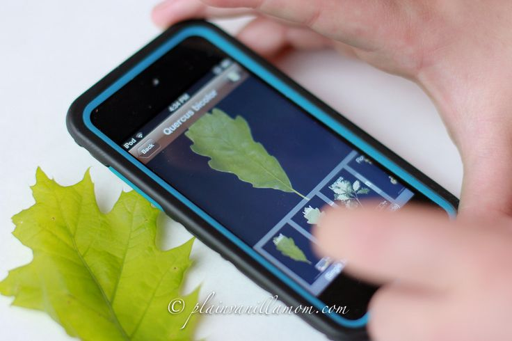 leaf app to identify treesApp Nature, Leafsnap App, Leaf App, Kids, Phones App, Nature Leafsnap Com, Science