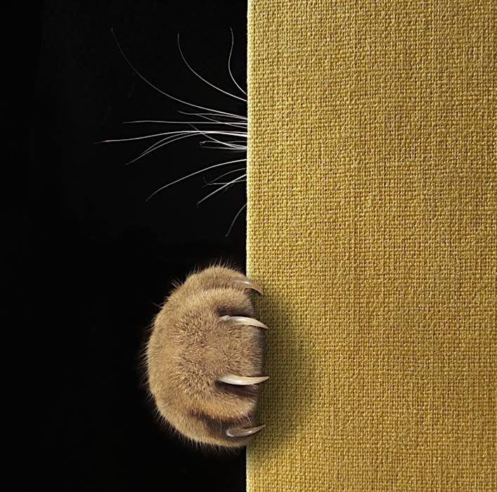 By Iryna Kuznetsova https://www.shutterstock.com/image-photo/cats-paw-long-sharp-claws-whiskers-482868979?src=PWOp3B3s6nbIgETT-HyXoA-1-60
