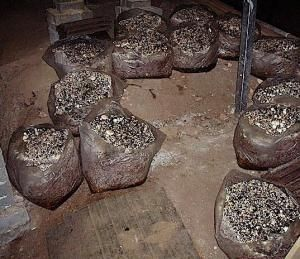 Como cultivar cogumelos comestíveis em casa