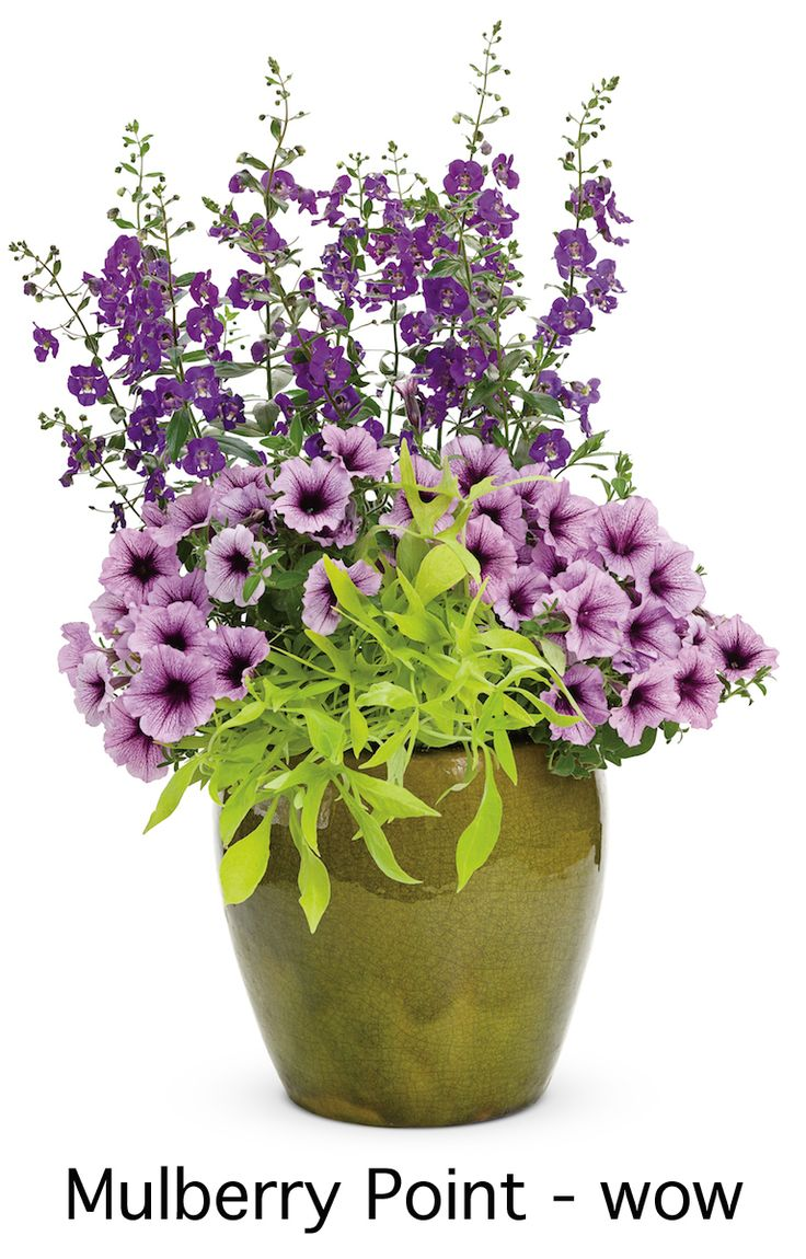 Best beautiful planted containersbasketsboxes u tubs images