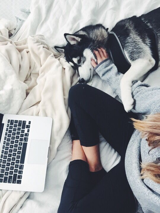 uhhhhhhh ok I'm pretty sure this is my dream life rn. just let me do my work in bed and cuddle with a husky pup. no joke. so i guess i need to decide to be more settled for this to happen and i'm not sure i'm ready for that yet but SOON. majestic cozy floof life yes pls.