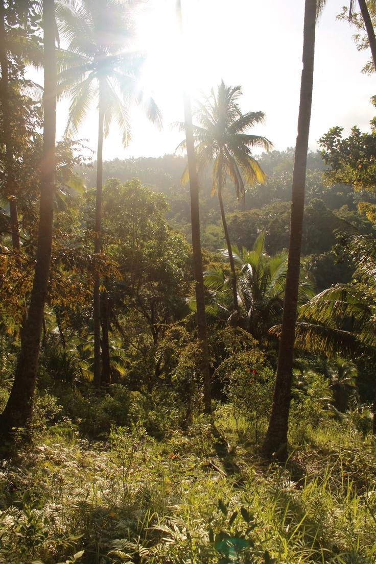 Tropical Rainforest Philippines. ) Tropical rainforest