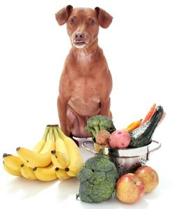 """Super """"people"""" foods for pets - people foods fit for your pet !!! Let's face it; most people give their pets food from the table. Contrary to what you may have heard, feeding people foods to pets isn't always a bad thing, especially if you're giving healthy options. In fact, you may be surprised at what you can safely - and nutritiously - feed your pet from the table.  1) Sweet Potatoes - one of nature's nearly perfect foods, sweet potatoes are so healthy they should be fed to your dog…"""