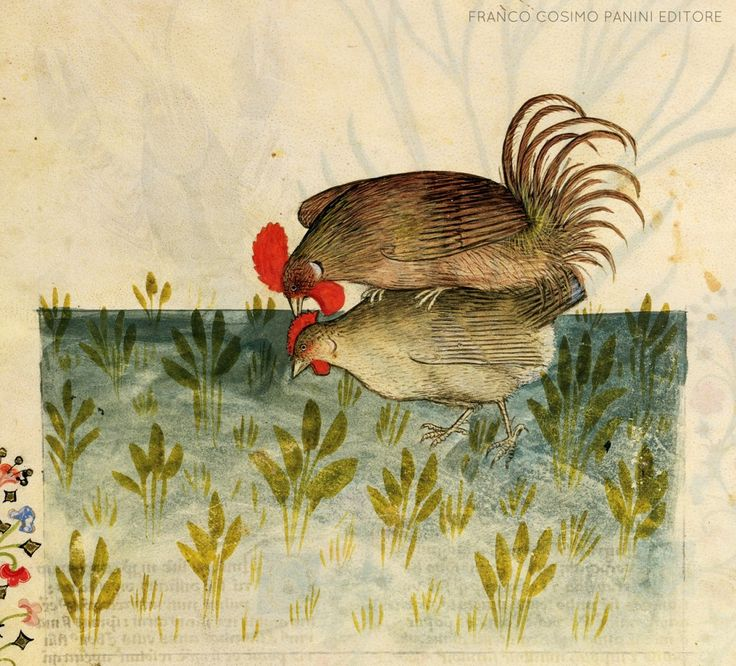 THE HEN AND THE ROOSTER. From 'Historia Plantarum' codex, late fourteenth century.