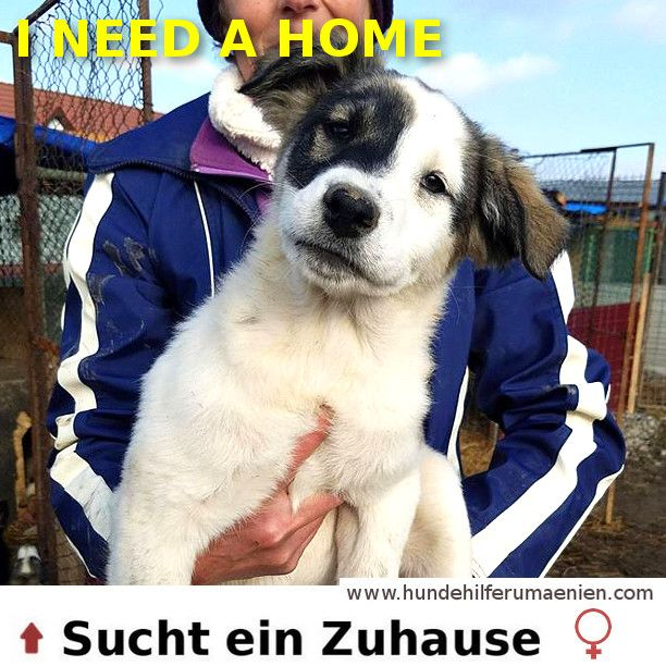 Peanut sucht ein Zuhause <3 #cutenessoverload #instagoods #chill #Rescue #streetdogs #dogsofinstgram #instagrampuppies #instagramdogs #instadogs #dogs #dogoftheday #doglovers #animalrescue #needhome #photooftheday #adoptdontshop #adoption #hundesucheneinzuhause #MeinHund