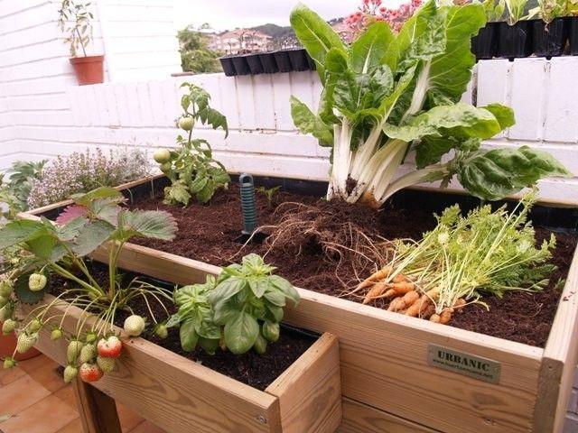 C mo hacer un invernadero casero para huerto urbano - Como hacer un huerto urbano ...