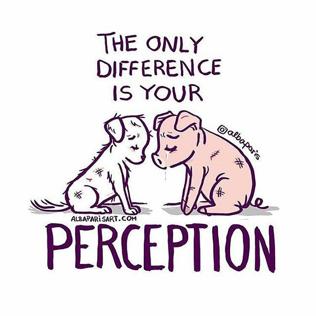 Vegan Truth... Food for thought! there is no difference #vegan perception