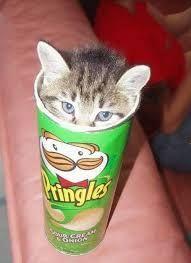 """Résultat de recherche d'images pour """"image chat drole"""""""
