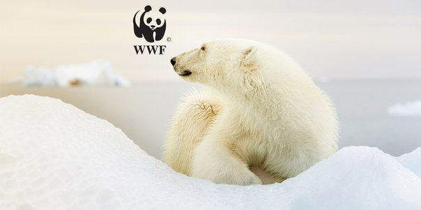 #proteplo #teplocom #wild #animals #nature #ecology #wwf