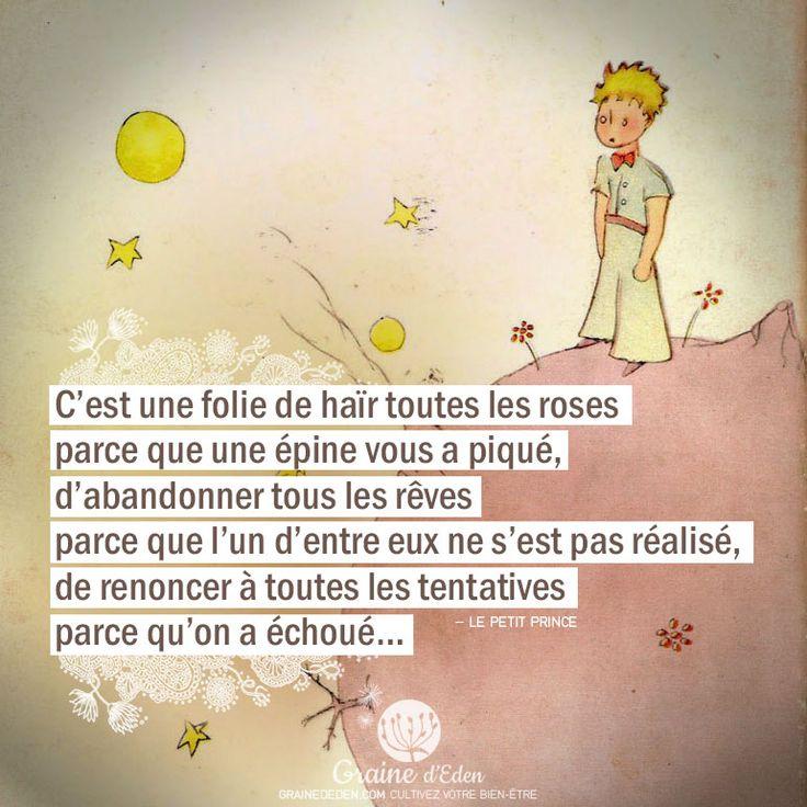 """""""C'est une folie de haïr toutes les roses parce que une épine vous a piqué, d'abandonner tous les rêves parce que l'un d'entre eux ne s'est pas réalisé, de renoncer à toutes les tentatives parce qu'on a échoué..."""" - Le Petit Prince"""