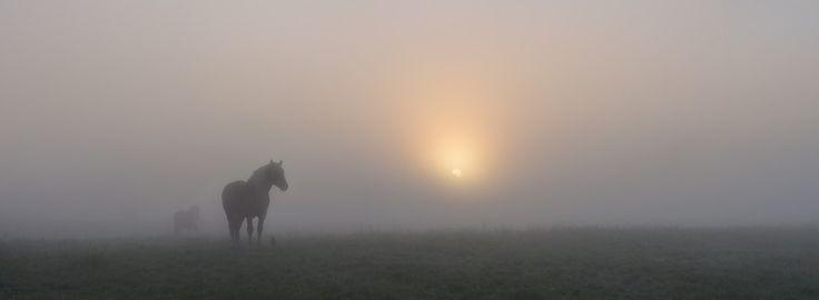 """Восход солнца.Лошади на лугу."""